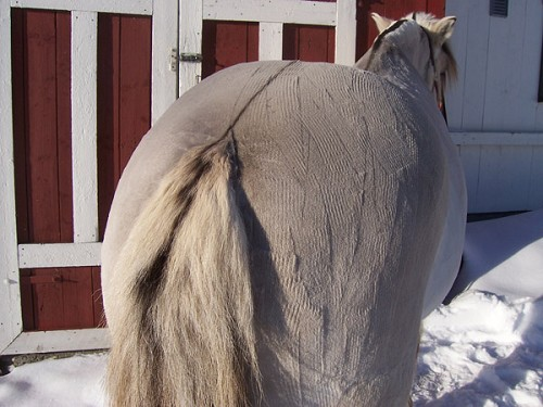 hester svart hvitt