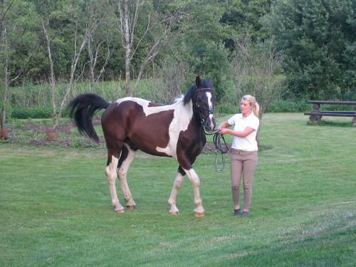 hester og ponnier