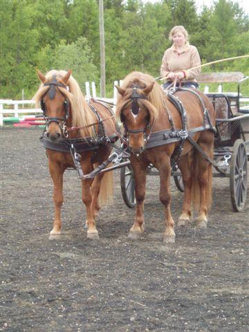 shira meg hest